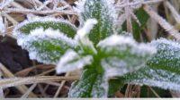 Fenomena Frost Kembali Melanda Wilayah Taman Nasional Bromo