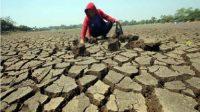 Bencana Kekeringan Mengancam 1.300 Desa, Sebanyak 699 Desa Kering dan Krisis