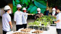 Harga Porang Turun Drastis, Menteri Pertanian Mengaku Belum Tahu