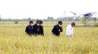 Bukti Negara Hadir Bangun Pertanian Indonesia Secara Merata