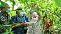 Berada di Kampung Jambu Banyuwangi, Dorong Warga Desa Berinovasi Produk Frozen