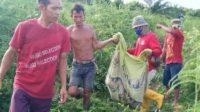 Gara gara Cari Sinyal ke Atas Bukit, Pemuda di Merangin Tewas Diterkam Harimau