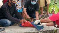 Mayat Bayi Hanyut di Sungai, Gegerkan Warga Sumobito Jombang