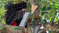 Ini Pengakuan Pemilik Pohon Nangka Yang Berbuah Durian