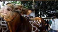 Momentum Pandemi dan Idul Adha, Menparekraf Sandiaga Uno Berbagi 1.000 Hewan Kurban